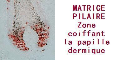MATRICE-PILAIRE.jpg